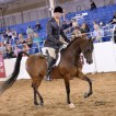 Pretty is as pretty does, Alovely Afire VF and Braden Davidson at Scottsdale 2016