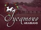 sycamorearabians1