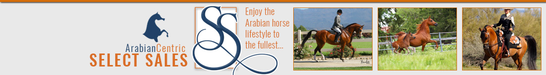 http://www.arabiancentric.com/select-sale-horses/