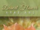 desertflower-0815