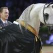 arab-horse-world-championship-2013-paris-1-2