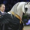 arab-horse-world-championship-2013-paris-1-2