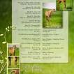 0416-springtimeatstellabella-foalinglistV3