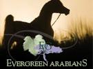 0417-evergreen