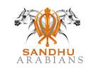 0118-SANDHUARABIANS