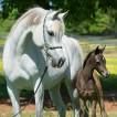 abt_horse